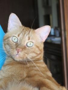 Il gatto Camillo in pelo e ossa